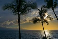 Palm Trees and Sunsets (Ken Mickel) Tags: clouds coast hawaii kenmickelphotography landscape maui ocean outdoors seascape seashore sky sunstar wahikuliwaysidepark waterscape nature photography silhouette sunburst sunset water lahaina unitedstatesofamerica