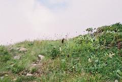 Nikon New FM2 × FUJIFILM SUPERIA PREMIUM 400 (oi (oichanahcio)) Tags: nikon fm2 × fujifilm superia premium400 film filmisnotdead filmcamera filmphotography filmshooters filmforever filmfeed believeinfilm hakuba nagano keepfilmalive analog analogue nofilter noedit