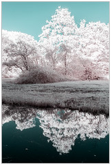 365 Infrared 263 Amsterdamse bos. (PeteMartin) Tags: 365 colour forest frame infrared landscape reflection water amstelveeen netherlands