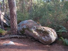 crocodile hippo boulder (squeezemonkey) Tags: france fontainbleau castlestafftrip fontainebleau boulder sandstone texture rock woodland