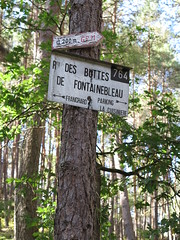 sign post in the woods (squeezemonkey) Tags: france fontainbleau castlestafftrip fontainebleau tree treetrunk sign pathway woodland