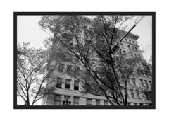 100 Street (Pics from the Bird Cage) Tags: nikon nikonf2 nikonf2photomic edmonton edmontonalberta ilford ilfordpanf ilfordpanf50 film filmcamera filmisnotdead classiccamera 35mm 35mmfilm 35mmphotography tokinael tokinael28mm bw blackandwhite blackwhite argentique analog analogue rodinol streetphotography themcleodbuilding johnkdow architecture chicagoschool chicagoschoolarchitecture