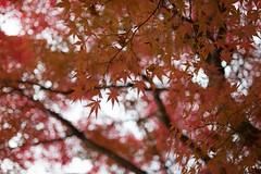 (deval.soledad) Tags: takayama japon