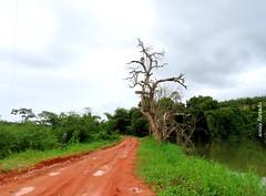Sexta-poser, Eu posso! (sonia furtado) Tags: sextaposer poser bonito pe natureza nature interior nordeste brasil brazil soniafurtado frenteafrente
