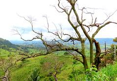 Sexta-poser, Eu posso! (sonia furtado) Tags: sextaposer poser bonito pe natureza nature interior nordeste brasil brazil soniafurtado árvore frenteafrente