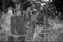 Woodvale Cemetery (Photo_Robson) Tags: bw brighton camera europe film flickr hp5plus400 ilford olympusom10 photo places scans sussex uk woodvalecemetery blackwhite blackandwhite filmcamera negative public exif:model=perfectionv700v750 geostate geocountry geolocation camera:model=perfectionv700v750 geocity exif:make=epson camera:make=epson