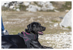 Chilled Puppy (Trevor Watts Photography) Tags: portland dorset gb uk england southcoast beach seaside water sea september 2019 autumn © trevorwatts nikon d750 jess dog puppy