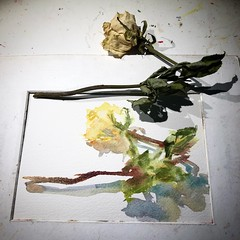 Day 1504 The #rose #painting for today. #watercolour #watercolourakolamble #sketching #stilllife #flower #art #fabrianoartistico #hotpress #paper #dailyproject (akolamble) Tags: rose painting watercolour watercolourakolamble sketching stilllife flower art fabrianoartistico hotpress paper dailyproject