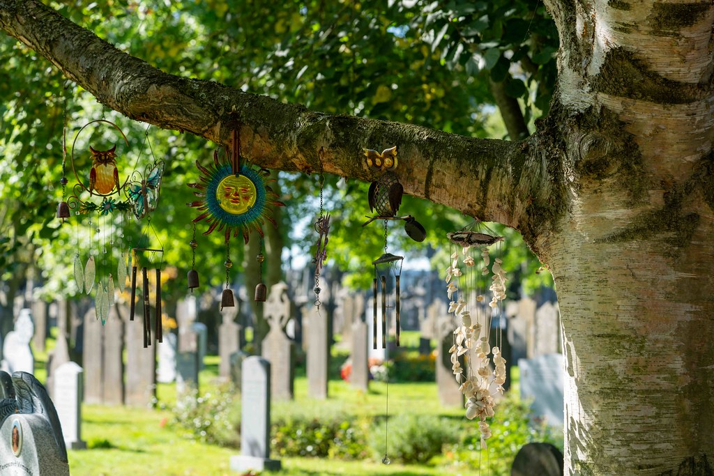 TODAY I VISITED GLASNEVIN CEMETERY [TODAY I USED A SONY 90MM MACRO LENS]-155964