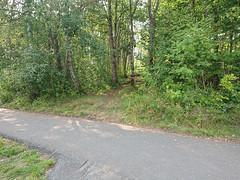 DSC_1621-2 (mtbboy1993) Tags: trail sti singletrack askim indreøstfold østfold trees norway norge rawtherapee sonycameraapp grass forest skog foresttrail tursti