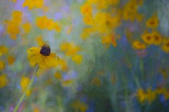 To Know God Is To Love Many Things (Christina's World : On & Off) Tags: flowers abstract impressionism impressionistic daisies yellow garden green gold painterly pastels artistic california creative colorful colors dramatic digitalart joy light mood nature natureabstract outdoors plants painting sandiego scenic stilllife textures topaz unitedstates usa vividcolors view expressionism yellowflowers 8460 vangogh field flowerfields balboapark