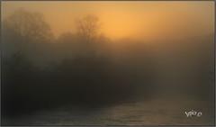 River Mist. (Picture post.) Tags: landscape nature green autumn mist river trees sunrise water paysage arbre brume