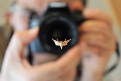 In focus (montseny visions) Tags: insect moth nature naturephotography naturephoto natural naturalworld selfie palautordera catalunya catalonia ngysa macro life wildlife wild earth