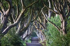 The Dark Hedges (elmarfis) Tags: darkhedges northernireland trees beechtrees beeches nikon mystic