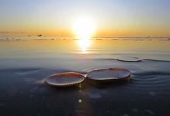 IMG_0066x (gzammarchi) Tags: italia paesaggio natura mare ravenna lidodidante alba sole conchiglia coppia poesia haiku