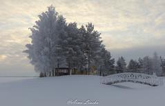 winter (liuskaa) Tags: winter snow frost snowing cold ice sky sunset light forest white finnishnature clouds landscape morning beach finland peräseinäjoki