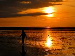 Sonnenuntergang im Wattenmeer (Sunset in the Wadden Sea) (skruemel86) Tags: tideland mudflat wadden sea wattenmeer nordsee nationalpark sonnenuntergang silhouette reflexion reflektion watt offshore möwe tidenhub priel süderpiep norderpiep piep diethmaschen büsum schleswigholstein wolken himmel panasonic lumix fz82 sky clouds tidal stroke seagull reflection sunset north