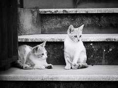 6568 - Luke & Leila (Diego Rosato) Tags: luke leila stair scala giardino garden stray randagio gatto gattino animale animal pet cat kitten fuji x30 rawtherapee bianconero blackwhite