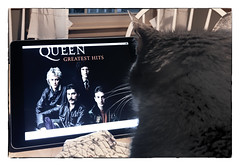 Quinn's Favorite Group (Timothy Valentine) Tags: home queen q quinnomannion cat happycaturday 0919 2019 camera2 eastbridgewater massachusetts unitedstatesofamerica