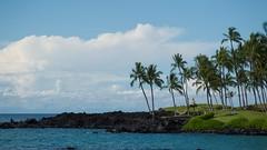 Vacation Dream (tourtrophy) Tags: bigisland sonyrx100m7 sonyrx100mk7 hilton waikoloavillage hawaii palmtrees