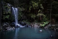 cool refreshment (Rafael Zenon Wagner) Tags: queensland tamborine mountain creek bach wasserfall wasser rainforest regenwald australia