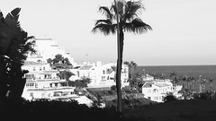 20181201_172221-EFFECTS (rugby#9) Tags: outdoor spain sea water landscape tree building trees palmtrees palmtree sky architecture sandiegosuites vista view apartments apartment complex holiday clublacosta fuengirola costadelsol californiabeachresort andalucia monochrome
