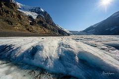 The Athabasca Glacier (Marc Haegeman Photography) Tags: athabascaglacier columbiaicefield jaspernationalpark alberta canada glacier globalwarming climate nikonz7 marchaegemanphotography travelphotography nikon landscapes icesheet continentaldivide