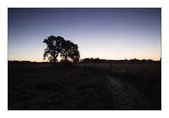 To the Oak (Theo Bauhuis) Tags: korenburgerveen ochtend sunrise oak eik bomen trees path zonsopgang bluehour nature natuurmonumenten