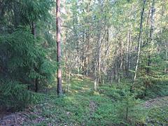 Trail (mtbboy1993) Tags: kykkelsrud askim indreøstfold østfold norway norge skog forest singletrack tursti trail skogsti foresttrail sonycameraapp rawtherapee