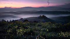 Spring in Tuscany (Fabrizio Massetti) Tags: landscape landscapes light tuscany tree toscana sanquirico belvedere fog clouds color cambo phaseone rodenstock iq180 italia italy pienza panorami fabriziomassetti famasse countryside