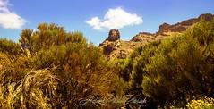 Tenerife Desert Bush (actionphotopassion) Tags: park nature naturalpark desert a99m2 a99ii tenerife canaryislands adventure hiking mountain volcan bush canarias islas canary island
