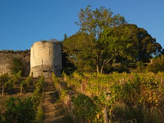 At the foot of the tower (François NOËL) Tags: landscape tower middleage vine sunlight colors beautiful sundown summer mood hasselblad castle