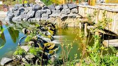 River - 7435 (✵ΨᗩSᗰIᘉᗴ HᗴᘉS✵74 000 000 THXS) Tags: huaweip30pro huawei pairidaiza water waterfall cascade belgium europa aaa namuroise look photo friends be yasminehens interest eu fr party greatphotographers lanamuroise flickering