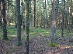 Trail (mtbboy1993) Tags: kykkelsrud askim indreøstfold østfold norway norge skog forest singletrack tursti trail skogsti foresttrail sonycameraapp