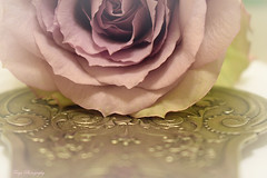 Grandma's silver... (Maria Godfrida) Tags: silver vintage cakeserver cutlery old rose closeup macro pink flower plant bokeh crazytuesday