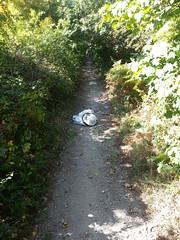 20190921_124654 (JohnSeb) Tags: johnseb sustrans volunteering leeds templenewsam ncn66 leedstpt cycleroute cycling bridleway path