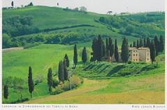 Cypress Grove At Siena, Italy (AunteyEm/MichelleW) Tags: postcards postcrossing siena sienaitaly cypress