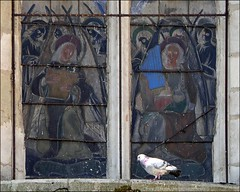 Eyes on the pigeon (kimbenson45) Tags: beaune pigeon stainedglass bird building windows architecture
