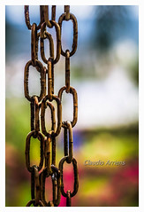 Chains (Claudio Arriens) Tags: sonynexf3 carlzeiss tessar 50mm brasil corrente chain manualfocus m42