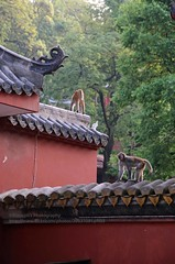 Guiyang, Hongfu temple (blauepics) Tags: china guizhou province guiyang city stadt town houses häuser buildings gebäude architecture architektur old alte mountain berg historical historisch hongfu temple tempel religion buddhism buddhismus monkey ape affe animal tier wild roof dach red rot