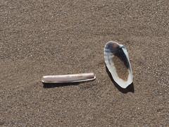 Shells (Artybee) Tags: beach sea coast waves sand mablethorpe lincolnshire