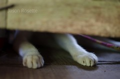Feet of a Playful Cat Seen Beneath the Door of a Rural House in Cambodia (jasonrosette) Tags: camerado jrosette jasonrosette asia cambodia organic wooden house animal cat feet play farm playful