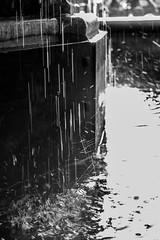 Le Perron (Liège 2019) (LiveFromLiege) Tags: perron liège wallonie belgique fontaine fountain fontana lg liege luik leperrondeliege noiretblanc noirblanc blackandwhite blackwhite blackandwhitephotography nb bw whiteandblack whiteblack architecture lüttich liegi lieja belgium europe city visitezliège visitliege urban belgien belgie belgio リエージュ льеж