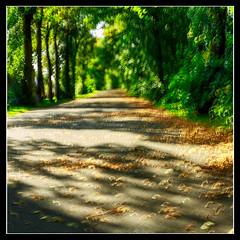 Autumn (1 of 1)-6 (ianmiddleton1) Tags: autumn bellahoustonpark leaves trees