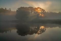 Penetrating (jasonhudson2) Tags: cumbria lakedistrict sony landscape dawn sunrise mist trees light reflections water river