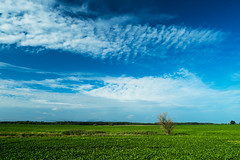 Simple Landscape (Slav.Burn) Tags: sky blue green countryside july morning tree poland pentaxart smcda15mmf4limited