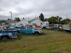 Lots of Fords (dave_7) Tags: ford classic pickup truck international