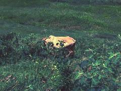 Atom Heart Mother (Mridul Bangladeshi) Tags: documenting journalism journalists filmphoto filmphotography filmcamera film art grass asia green bangladesh documentary village life urban iphoneclick iphone photography street animal cow