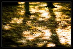 Autumn (1 of 1)-5 (ianmiddleton1) Tags: autumn bellahoustonpark leaves trees