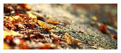 Autumn (1 of 1)-2 (ianmiddleton1) Tags: autumn bellahoustonpark leaves trees